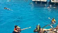 Snorkeling At Tiran Island By Boat Day Trip