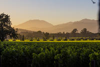 6 Hour Wine Country Tour from San Francisco