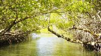 Mangrove Lagoon Tour in Cancun
