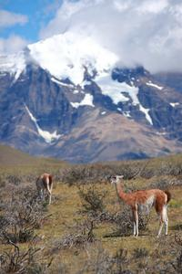 4-Day Chilean Patagonia Tour: Puerto Natales, Serrano Glacier and Torres del Paine National Park