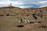 Punta Arenas Shore Excursion: Otway Sound Penguin Colony Tour