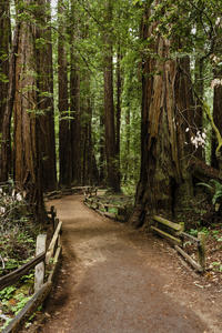 Small-Group Muir Woods, Wine and Beer Tour from San Francisco