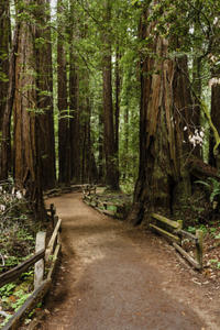 Wine Country and Muir Woods Small-Group Tour from San Francisco