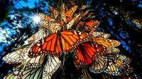 7-Day Tour from Mexico City: Monarch Butterfly Migration Experience