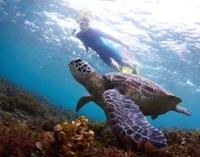 Akumal Sea Turtle Snorkel Experience from Playa del Carmen*