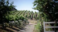 Malibu Countryside Wine Hike