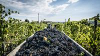 Small-Group Tour: Chianti Winery, Montefioralle, and Greve in Chianti