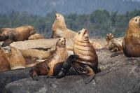 Marine Wildlife Tour by Zodiac