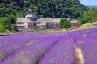 Small Group Provence and Lavender Museum Day Trip from Avignon*