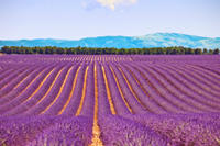 Small-Group Lavender Day Trip from Avignon: Aix-en-Provence, Valensole Plateau and L