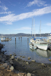 Muir Woods and Sausalito Tour from San Francisco Including Optional Bay Cruise