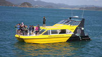Dolphin Encounter in the Bay of Islands