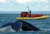 Whale Watch*