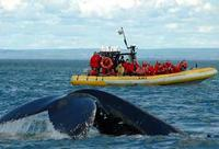 Full-Day Whale Watching Cruise from Quebec