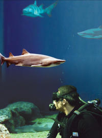 Dive with the Sharks at The Florida Aquarium in Tampa Bay