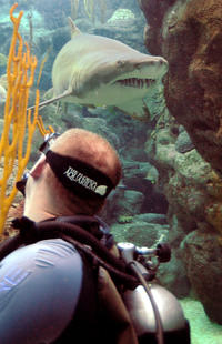 Tampa Shore Excursion: Dive with the Sharks at the Florida Aquarium