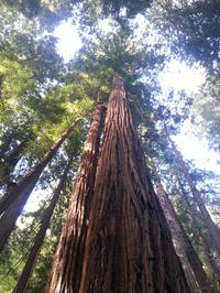 Small Group Muir Woods and Wine Country Tour