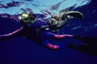 Turtle Reef Kayak Tour*