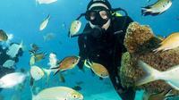 4-Dive Scuba Adventure in Fuerteventura
