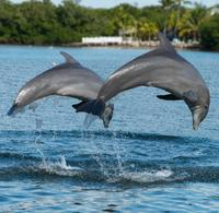 Dolphin Encounter at Dolphin Cove Negril