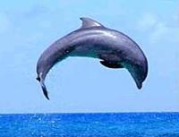 Ocho Rios Dolphin Swim