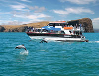 Akaroa Harbour Nature Cruise*