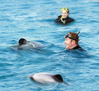 Swimming with Dolphins in Akaroa*