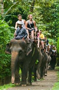Elephant Safari Park and White-Water Rafting Adventure