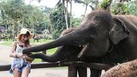 Denpasar Bali Night Elephant Visit plus Dinner (No Ride) 3665P173