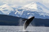 Ver la ciudad,Actividades,Gastronomía,Tours gastronómicos,Actividades acuáticas,Salidas a la naturaleza,Tours gastronómicos,Ballenas en Juneau