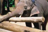 Elephant Trekking in Pattaya