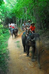 One-Hour Elephant Jungle Trek from Phuket