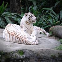 Singapore Shore Excursion: Singapore Zoo Private Tour