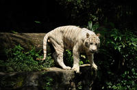 Singapore Super Saver: Night Safari and River Safari