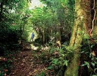 2-Day Small-Group Tour: Kinabalu National Park and Poring Hot Springs from Sabah
