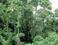 Private Tour: Kuala Lumpur Rainforest and Canopy Walkway Tour