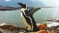 Full-Day Cape Point Peninsula and Boulders Beach Penguin Tour from Cape Town