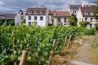 Montmartre Tour with VIP Clos Montmartre Vineyard Visit