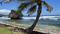 Barbados Shore Excursion: Island Highlights Half-Day Tour
