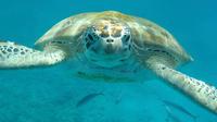 Barbados Shore Excursion: Pirate's Cove Turtle and Shipwreck Adventure