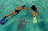 Snorkeling*