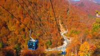 Fall Foliage Experience by Gondola Day Trip from Tokyo