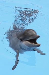 Dolphin Encounter at Ocean World