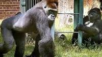 Johannesburg Zoo General Admission