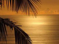 Freeport Bonfire on the Beach Bahamas Style