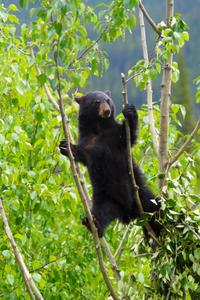 Maligne Valley and Wildlife Tour