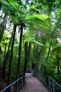 Private Tour: Blue Mountains Day Trip from Sydney Including Featherdale Wildlife Park