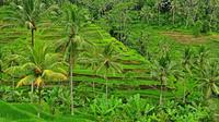 Private Tour: Full-Day Highlights of Ubud Tour
