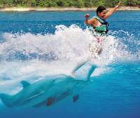 Cancun Dolphin Royal Swim on Isla Mujeres