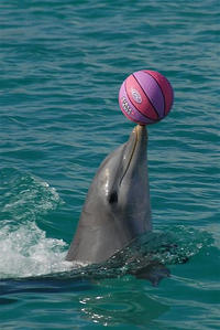 Grand Cayman Dolphin Encounter